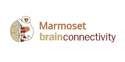 Marmoset Brain Connectivity Atlas (Australian Node and Polish Node)